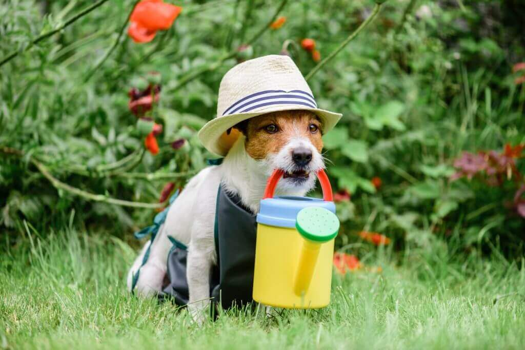 Dog as cute gardener wearing hat and apron with colorful watering can